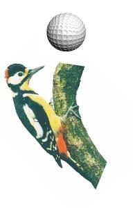 Freakn' woodpecker took my ball!